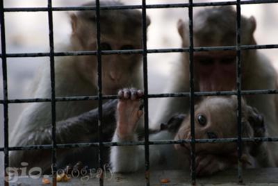 Bonding With My Monkey Friends