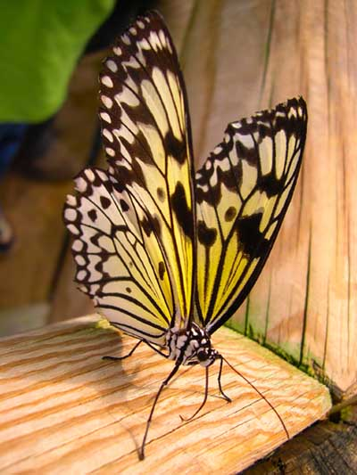 Close Up Photo Of A Butterfly