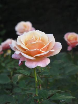 Flowers in New Zealand