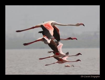 Flame Birds On Flight