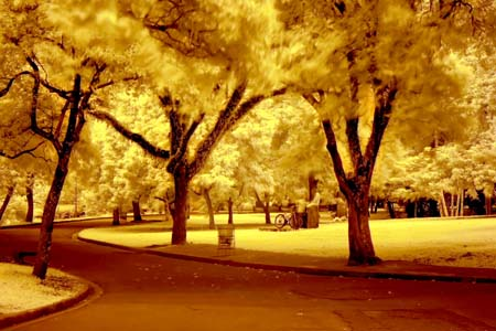 Infrared Landscape Shot With An Orange Glow