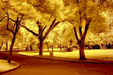 Infrared Landscape Shot With An Orange Glow