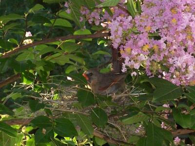 Nest Outside our Window