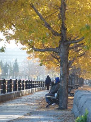 Sunny November in Montreal