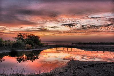 Dream Picture Of Khijadiya Bird Sanctuary Before Sunrise