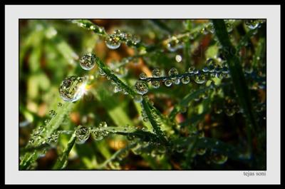 Raindrops Like Jewels