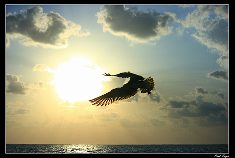 Bird flying over the ocean - Captured using Manual mode by Paul Timpa