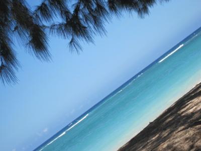 Sun Sand & the Shore